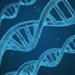 cffdna, wolne płodowe DNA, badania wolnego płodowego dna
